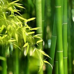Bambus & Leinen